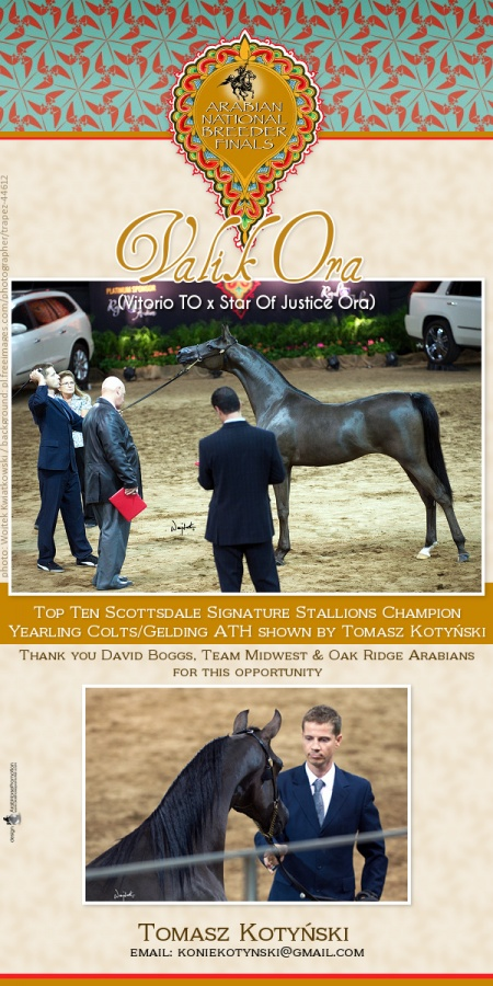 2015-10-03 • VALIK ORA (by Vitorio TO) – Arabian National Breeder Finals SSS Top Ten Yearling Champion Colts/Geldings AOTH shown by Tomasz Kotyński.