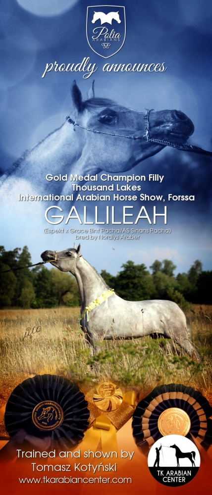 GALLILEAH - Gold Medal and higherst score of the show at Thousand Lakes International Show, Forssa