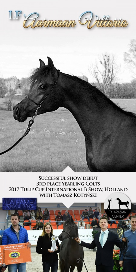 LF AARMAAN VITTORIO - 3rd place Yearling Colts 217 Tulip Cup B int Show, Holland