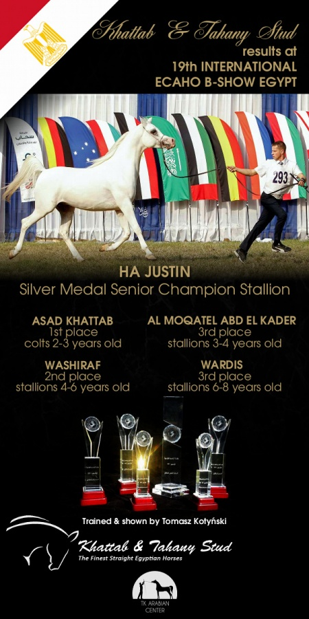 19th International ECAHO B Show Egypt: AH Justin - 1 place and Silver Medal Champion Stallion, Asad Khattab - 1st colts 2-3 years old, Washiraf - 2nd stallions 4-6 years old, Al Moqatel Abd El Kader - 3rd stallions 3-4 years old, Wardis - 3rd stalloins 6-8 years old