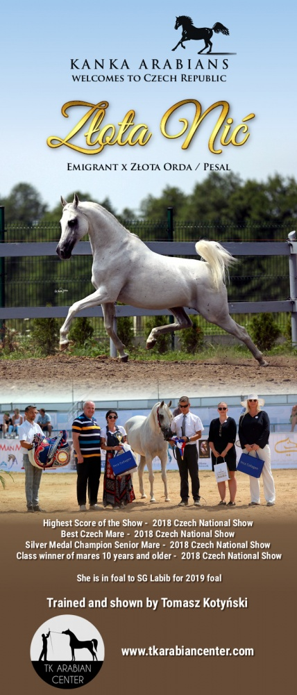 ZŁOTA NIĆ - Class winner, Silver Medal Champion Senior Mare, Best Mare and Highest Scored Horse of The Show - 2018 Czech National Show