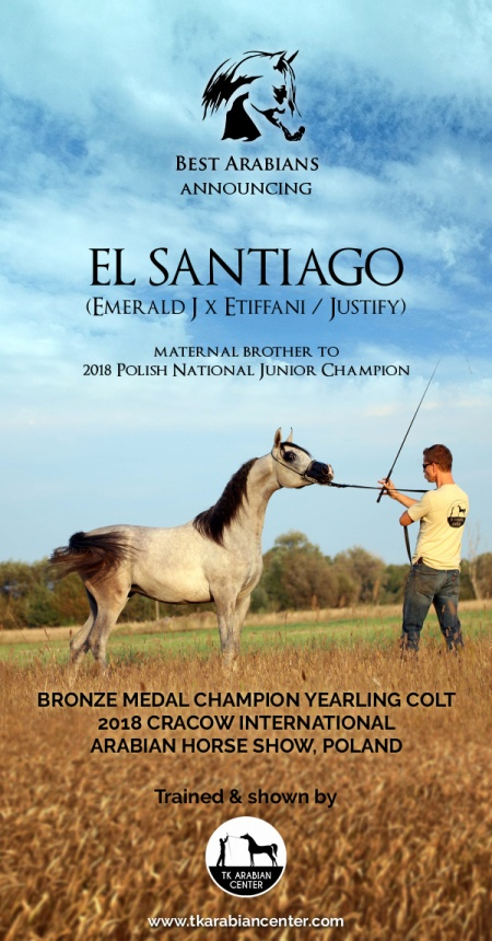 EL SANTIAGO - Bronze Medal Yearling Colt Cracow International Show, Poland