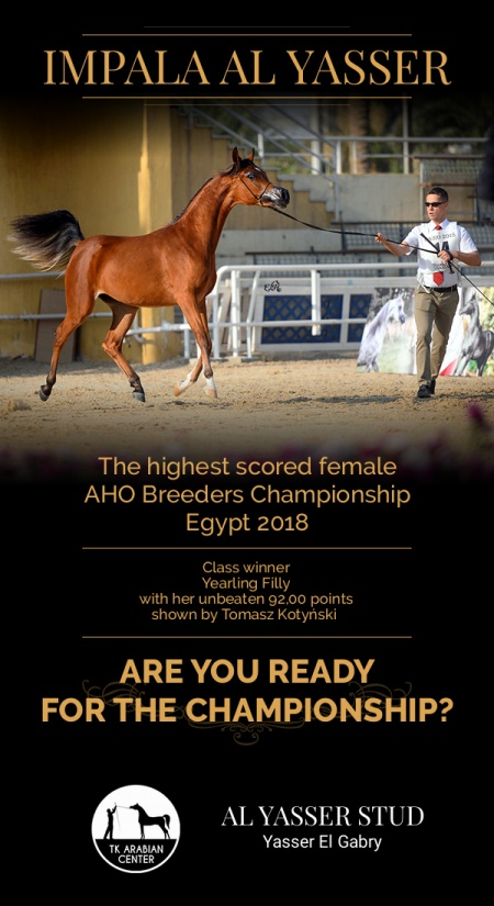 IMPALA AL YASSER - the highest scored female (92,00) and class winner AHO Breeders Championship Egypt 2018