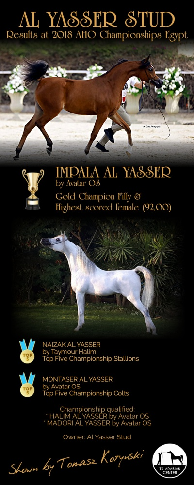 Gold Meal, the highest scored female, 5 horses championship qualified including 2 Top Five Championship - AHO Breeders Championship 2018